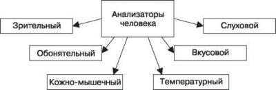 Анализаторы человека