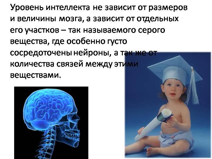 интеллект